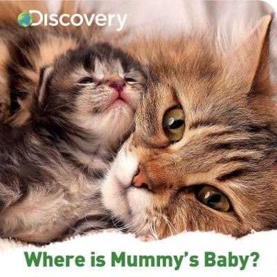 discovery where is mummy's bab